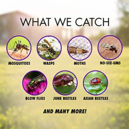 What We Catch - DynaTrap Insect Traps catch a wide variety of pest insects known to plague homes