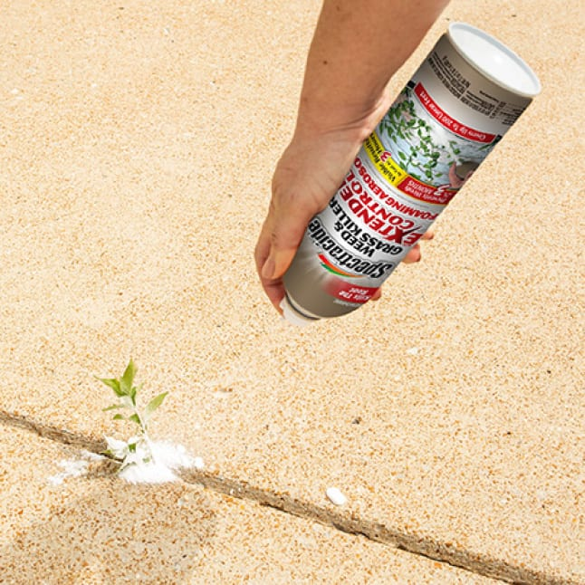 person spraying weed and grass killer on a weed in concrete crack