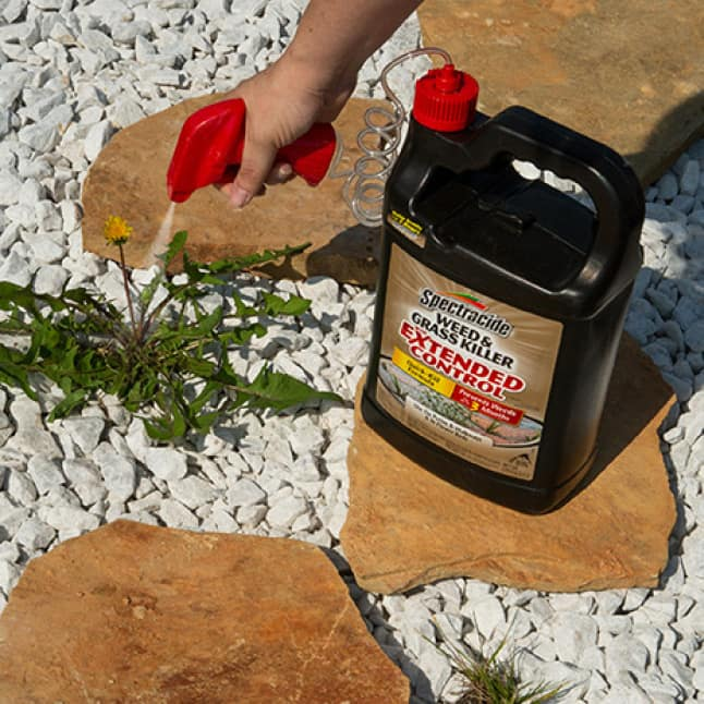 person spraying weed and grass killer on a weed in decorative rocks