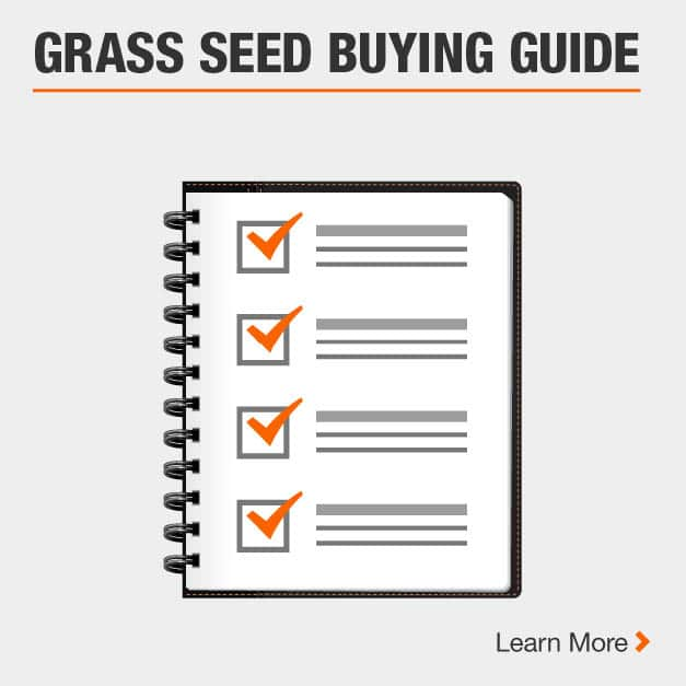 Grass Seed Buying Guide