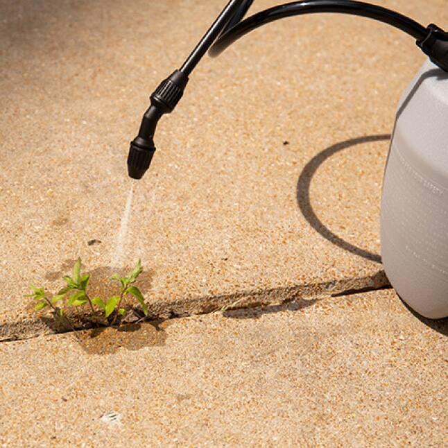 pump sprayer spraying weed growing in concrete crack