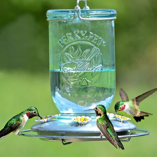 room for multiple birds, decorative glass hummingbird feeders