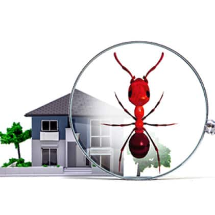 liquid ant bait attracts and kills all common household ants