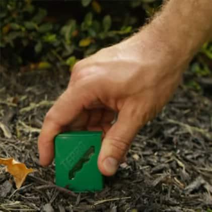 prevent ants from returning, liquid ant bait