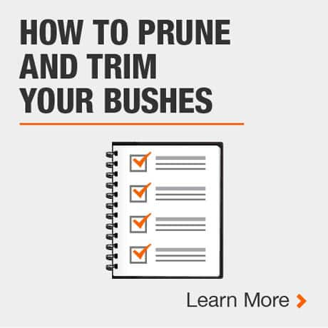 How to Prune and Trim your Bushes