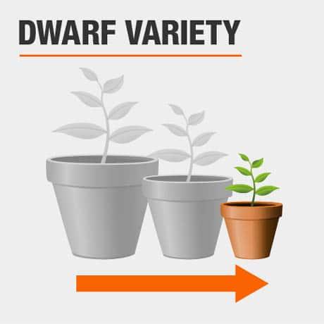 Dwarf Variety