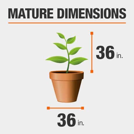 Mature Dimensions