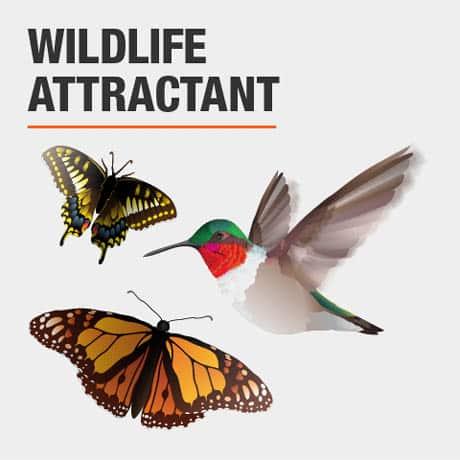 Wildlife Attractant
