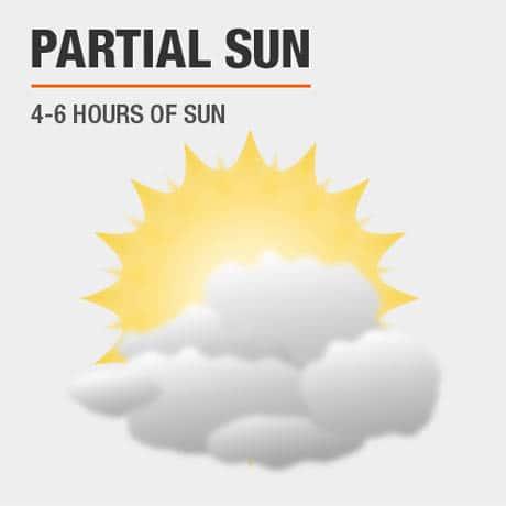 Sun Needs