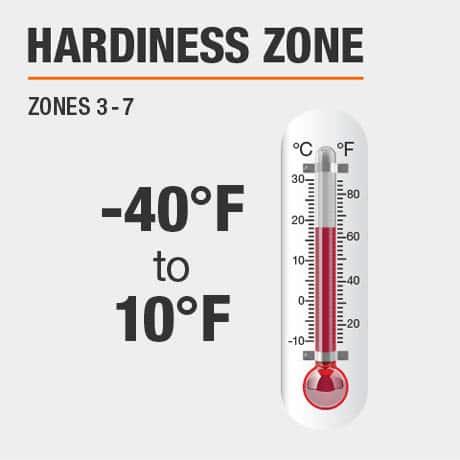 Hardiness Zone | Zone 6-9