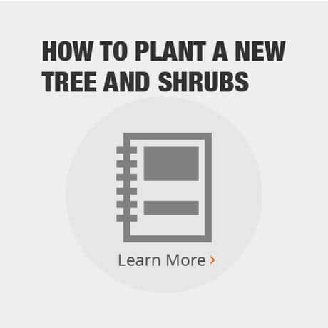How to Plant New Trees and Shrubs