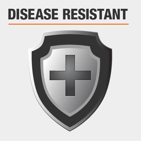 Disease Resistant