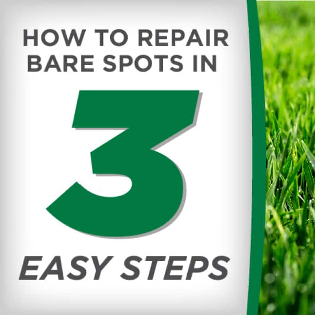 Pennington One Step Complete for Tall Fescue Areas How to Apply
