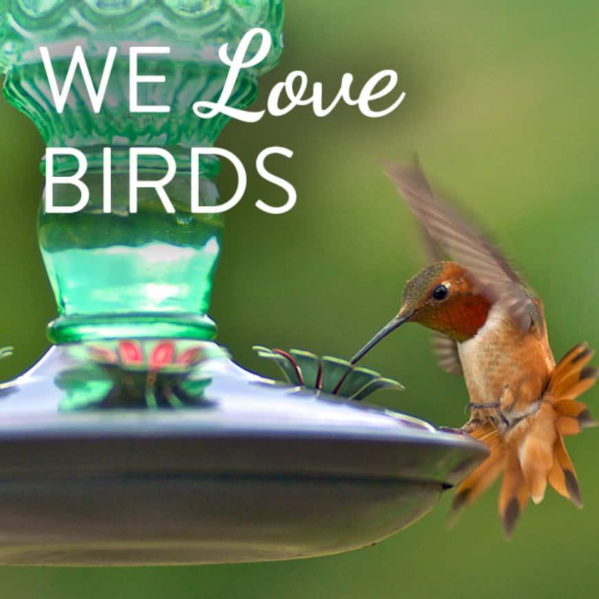 we love birds, decorative glass hummingbird feeders