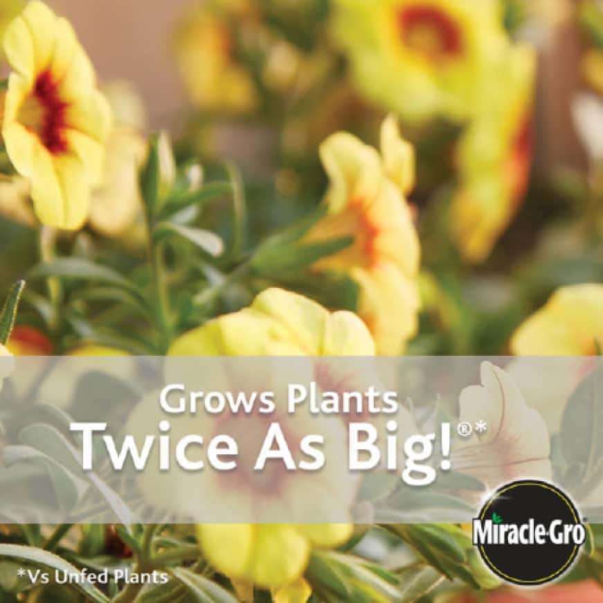 Grows Plants Twice As Big with Miracle-Gro Potting Soil
