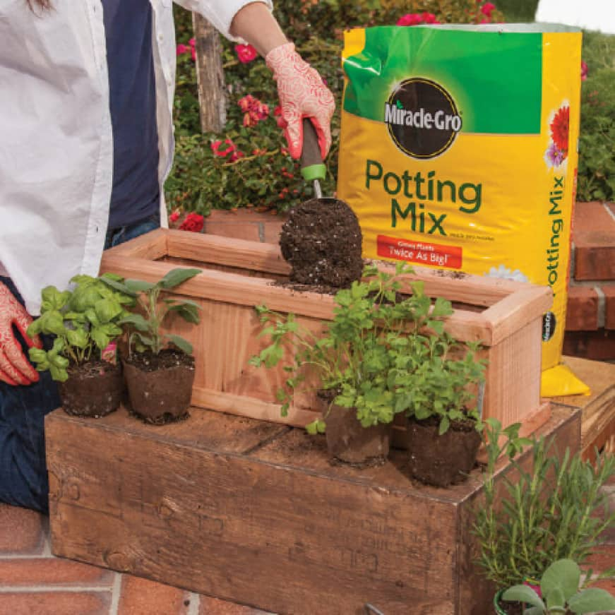 Planting plants in outdoor container
