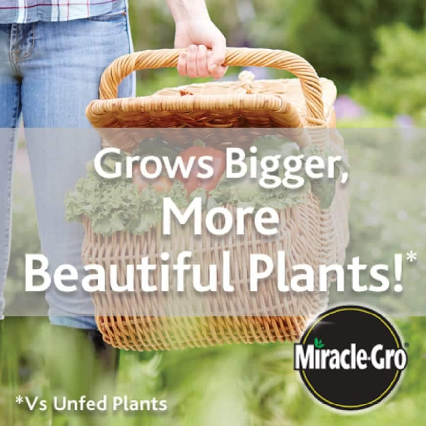 Feeds up to 3 Months. Grows Bigger, More Beautiful Plants!