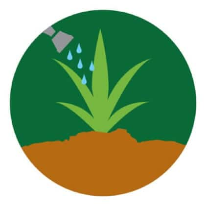 Water plants icon.