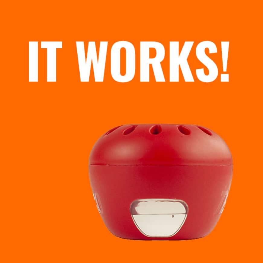 it works, fruit fly trap