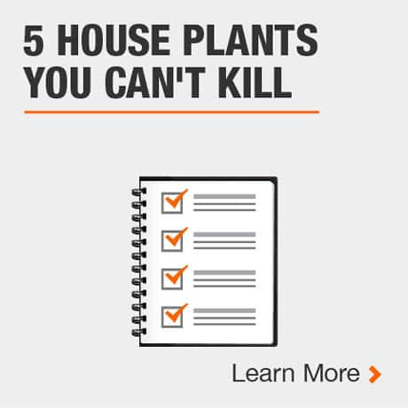 5 House Plants you Can't Kill