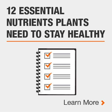 12 Essential Nutrients Plants Need to Stay Healthy