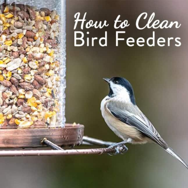 how to clean seed feeders, sure lock lid seed feeders