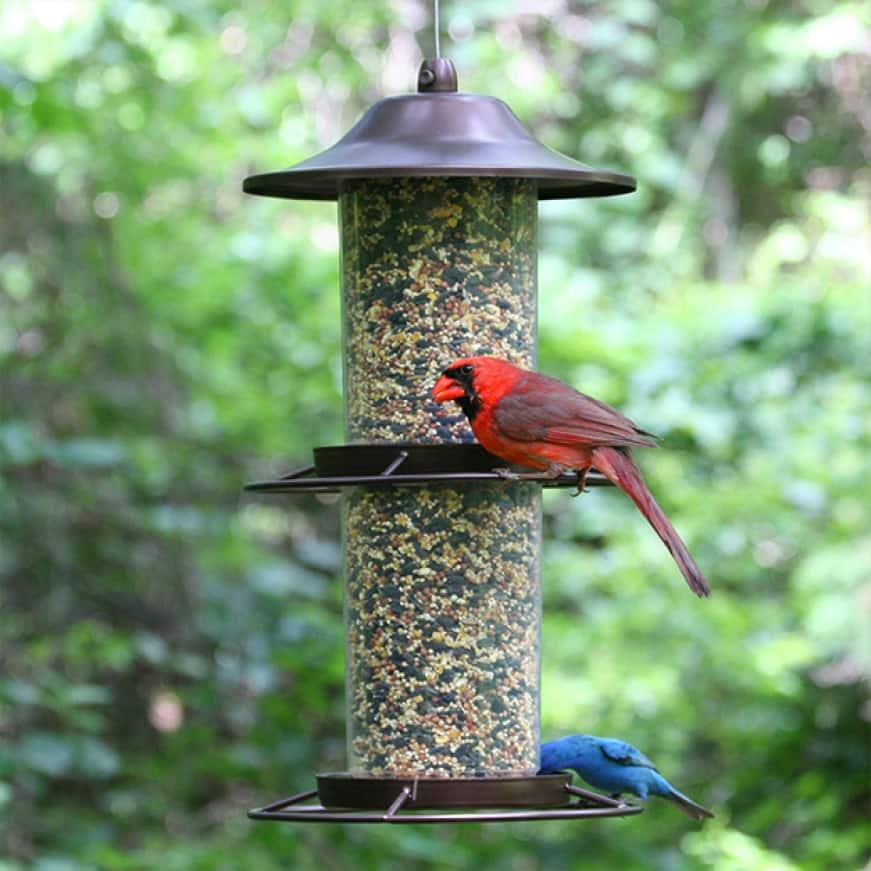 room for birds, sure lock lid seed feeders