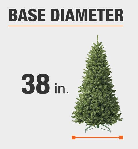 The base diameter of this tree is 38 in.