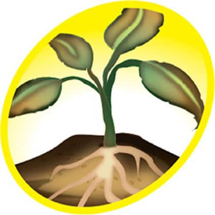 profile of weed and root system