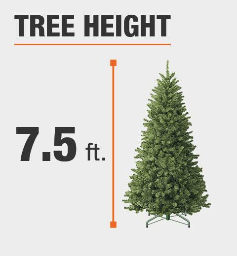 Tree Height