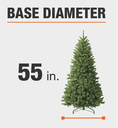 The base diameter of this tree is 55 in.