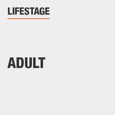 Lifestage Adult