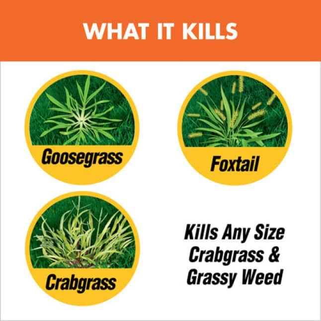 What It Kills
