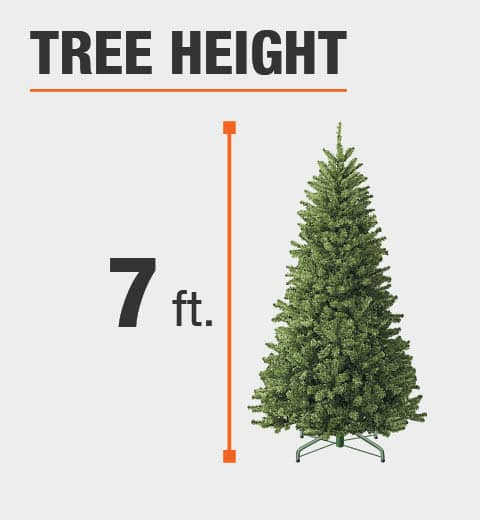 The tree height is 7 ft.