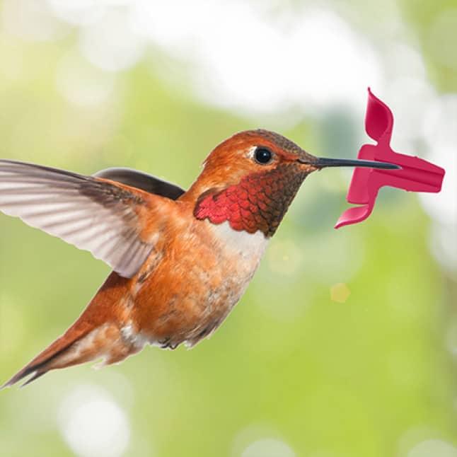 natural flower feeding ports, decorative glass top fill hummingbird feeders