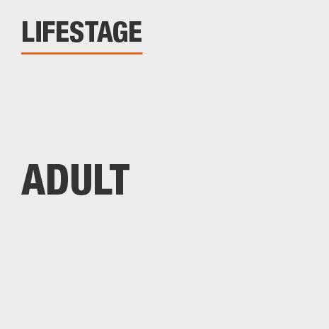 Lifestage Adult