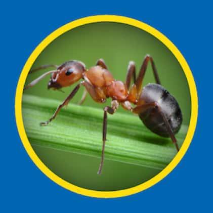 Sevin Ready-To-Use Insect Killer Power Sprayer kills ants
