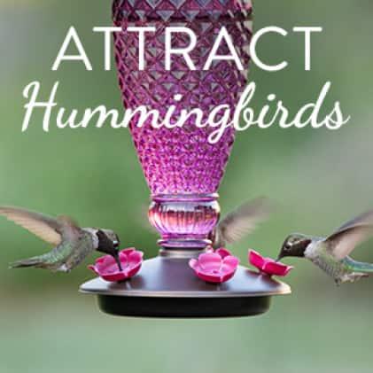 attract hummingbirds, top fill hummingbird feeders