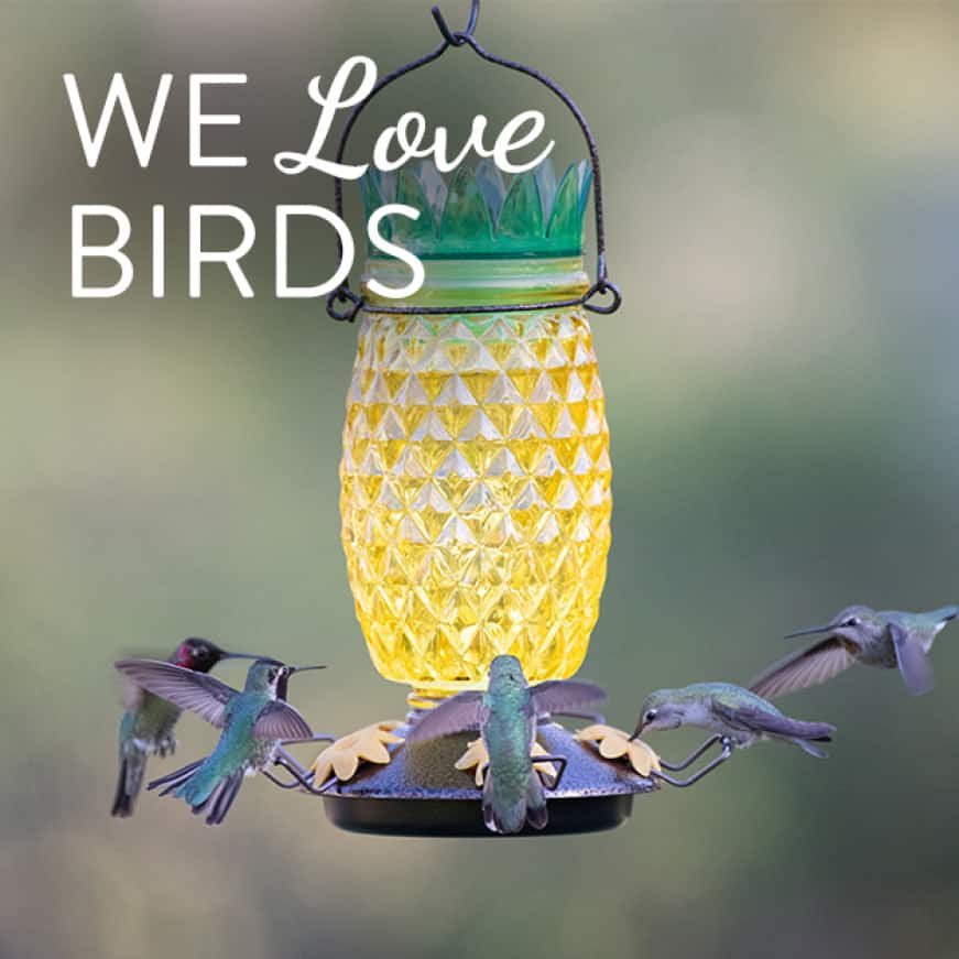 we love birds, decorative glass top fill hummingbird feeders