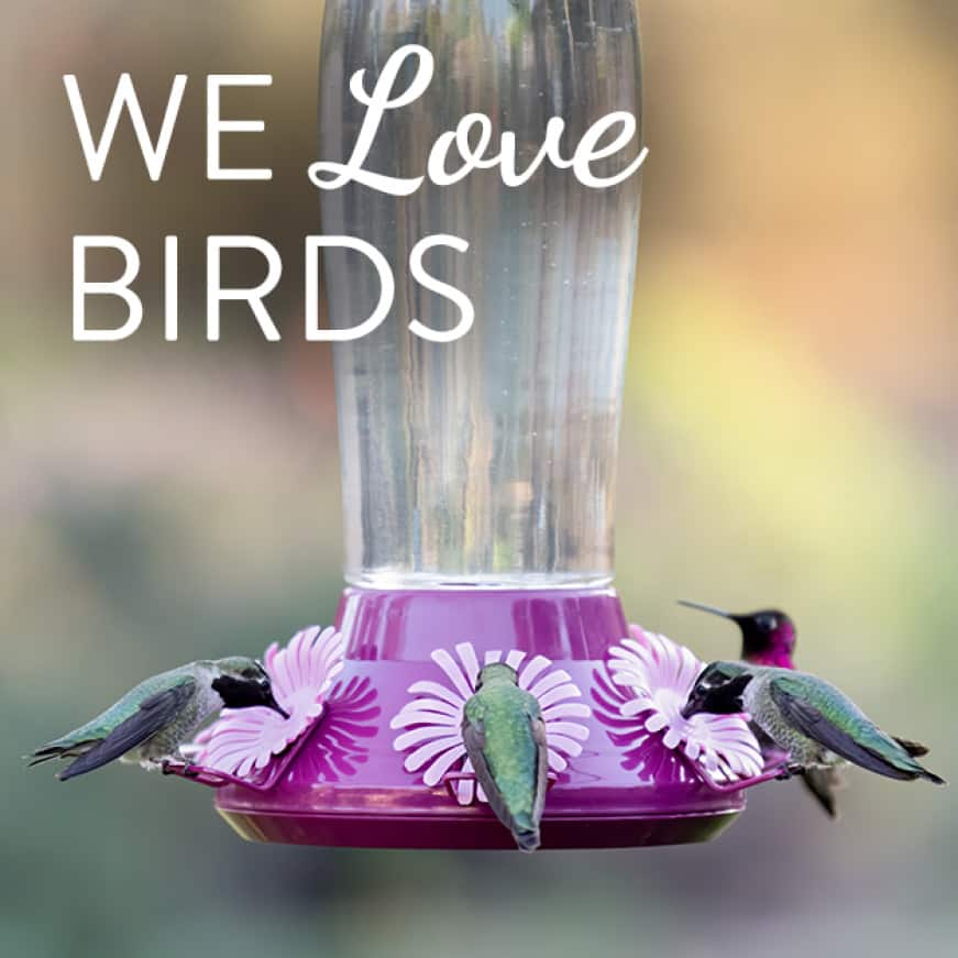 we love birds, top fill hummingbird feeders