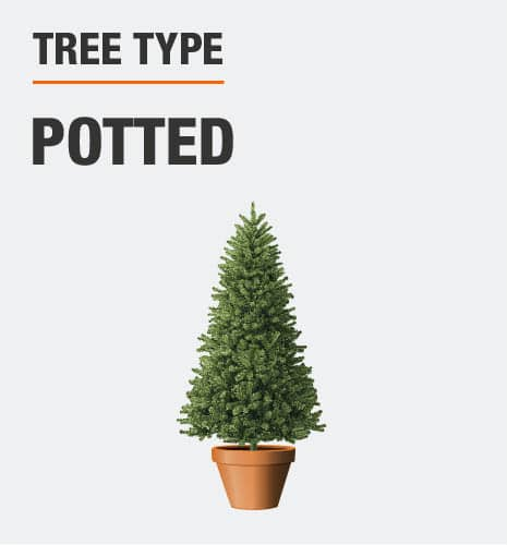 This is a potted tree