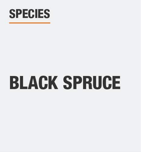 Tree species is black spruce