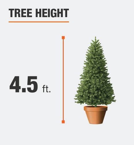 The tree height is 4.5 feet