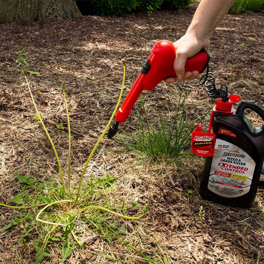 person sprayer weed and grass extended control on a weed in mulch
