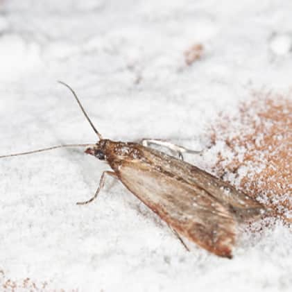 What We Catch- Moths