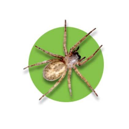 Kills spiders