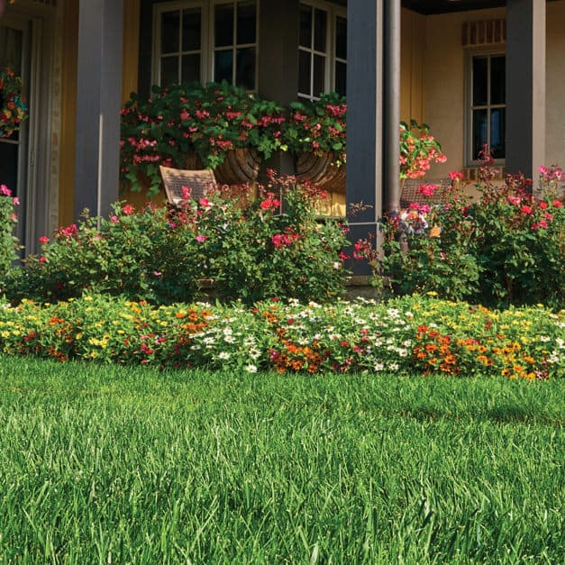 Image of a Beautiful Scotts Lawn