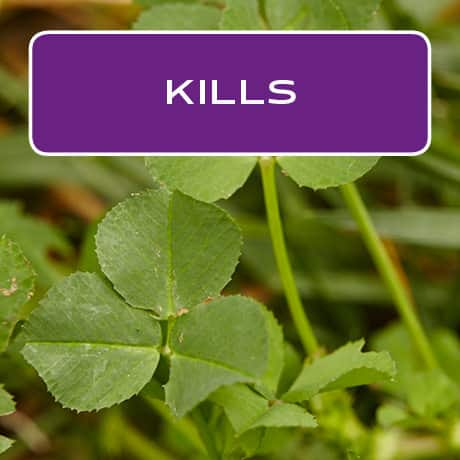 Kills the weeds
