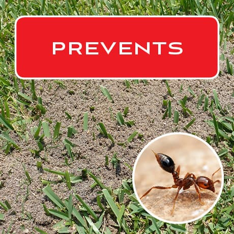 Prevents and kills fire ants