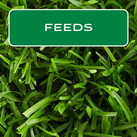 Feeds to build thick, green lawns